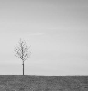 desolate for blog