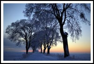 Winter Dawn FREE