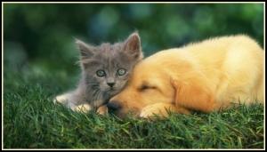 kitten and puppy border