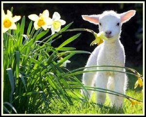 lamb free spring wallpaper border