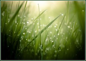 Morning_Grass_for_GLORY_DAY_ 80percent