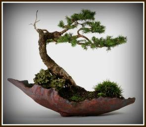 bonsai-1-adj