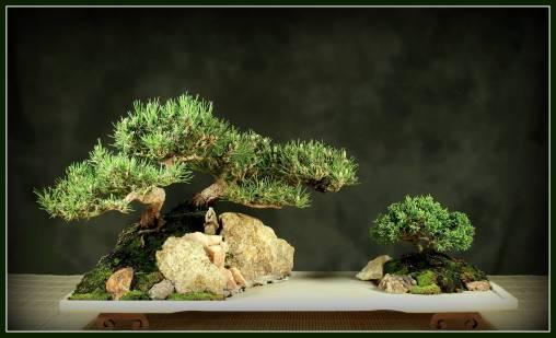 bonsai-3-adj