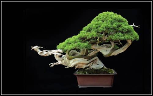 bonsai-done
