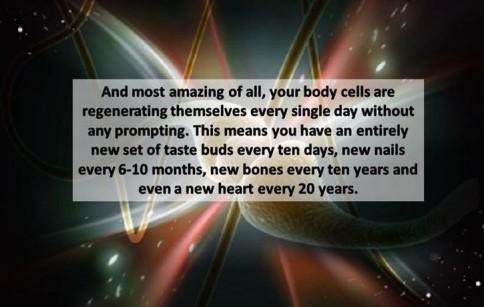 18-regeneration