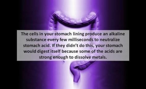 5-stomach