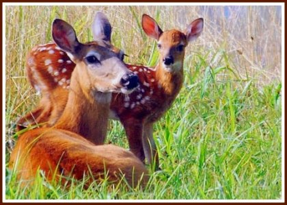 doe-fawn_1-final-for-post